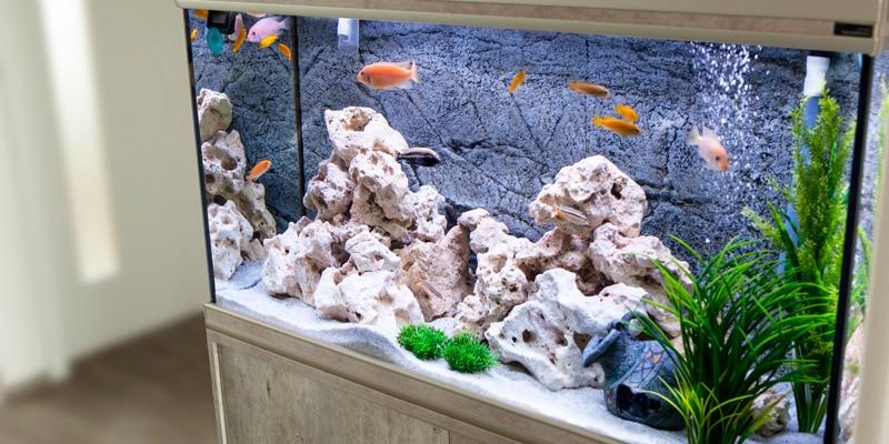 acuario silicona
